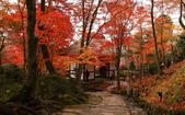 旅 遊 精 選:0095.jpg 京都嵐山 常寂光寺
