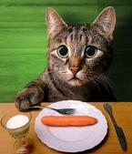 貓咪的五四三 ... 喵 ... :0022.jpg