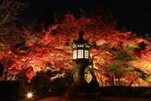 秋之戀(14) 京都秋夜:1295.jpg 京都永観堂