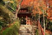 2010日本關西(4)可愛的愛宕念佛寺:0420.jpg 京都 愛宕念佛寺