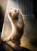 貓咪的五四三 ... 喵 ... :0023.jpg