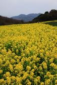 春日鐵道(2) 淡路島.流金歲月:0140.JPG あわじ花さじき