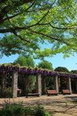 北國之春(8) 春日花海:0651.jpg 昭和記念公園