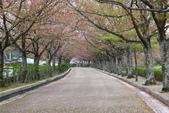 春(5) 幾度花落時:0471.JPG 和らぎの道