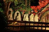 秋之戀(14) 京都秋夜:1156.jpg 京都大覚寺