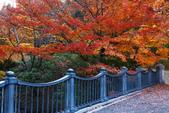 秋葉鐵道(三) 晴空鐵道:0347.JPG 栃木県中央公園