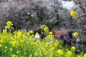 春(1) 似水流年:0021.JPG 熊谷桜堤