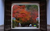 旅 遊 精 選:0997.jpg ( 2013 . 12 . 1 ) 宇治 興聖寺