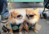 日本櫻花(11) 京都平野神社與嵐山:0717.jpg 嵐山的「儷狗」