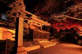 秋之戀(14) 京都秋夜:0870.jpg 坂本地区西教寺
