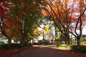 秋(2) 在水一方:0154.JPG  西那須野.大山参道