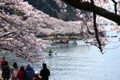 春(6) 春的禮讚:0673.JPG 滋賀.海津大崎