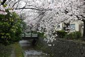 日本櫻花(14) 哲學之道與蹴上鐵道:0849.jpg 哲學之道