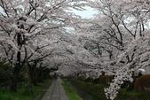 日本櫻花(14) 哲學之道與蹴上鐵道:0856.jpg 哲學之道
