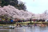 春(6) 春的禮讚:0676.JPG 滋賀.海津大崎
