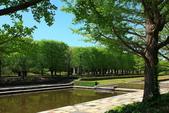 北國之春(8) 春日花海:0646.jpg 昭和記念公園