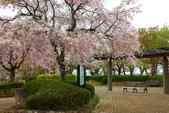 春(5) 幾度花落時:0464.JPG 和らぎの道