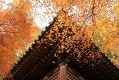 2010日本關西(4)可愛的愛宕念佛寺:0425.jpg 京都 愛宕念佛寺