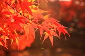 秋之戀(十) 愛.戀.嵐山:1028.jpg 京都嵐山