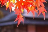 秋之戀(十) 愛.戀.嵐山:1027.jpg 京都嵐山