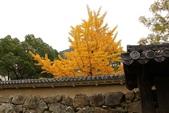 2010日本關西(1)兵庫三城:姬路、明石、神戶:0109.jpg 姬( 姫 ) 路城 , Himeji Castle