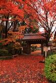 旅 遊 精 選:0997.JPG (2014-12-1 滋賀縣 西教寺)