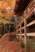 2010日本關西(4)可愛的愛宕念佛寺:0426.jpg 京都 愛宕念佛寺