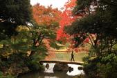 秋之戀(三) 庭園、森林、往事如昨:0136.jpg 六義園