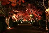 秋之戀(14) 京都秋夜:0861.jpg 坂本地区西教寺