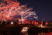 秋之戀(14) 京都秋夜:1158.jpg 京都大覚寺