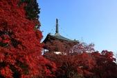 秋之戀(十) 愛.戀.嵐山:1025.jpg 京都嵐山