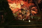 秋之戀(14) 京都秋夜:1296.jpg 京都永観堂