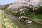 春(3) 似是故人來:0273.JPG 近江八幡水鄉めぐり