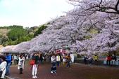 春(6) 春的禮讚:0691.JPG 滋賀.海津大崎
