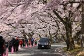 春(6) 春的禮讚:0695.JPG 滋賀.海津大崎