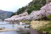 春(6) 春的禮讚:0680.JPG 滋賀.海津大崎