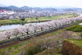 春(7) 美麗的零落:0964.JPG 船岡城址公園