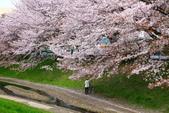 春(2) 藝界人生:0163.JPG 江川せせらぎ緑道