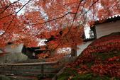 2010日本關西(3)京都東郊楓葉盟:0293.jpg  京都 曼殊院