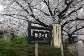日本櫻花(14) 哲學之道與蹴上鐵道:0853.jpg 哲學之道