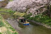 春(3) 似是故人來:0275.JPG 近江八幡水鄉めぐり