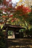秋之旅(六) 東海秋豔:0529.jpg 浜松城公園
