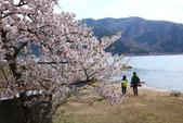 春(6) 春的禮讚:0669.JPG マキノ駅