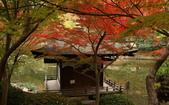 旅 遊 精 選:0092.jpg 和歌山城 紅葉溪庭園