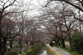 日本櫻花(14) 哲學之道與蹴上鐵道:0839.jpg 哲學之道