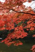 2010日本關西(5)嵐山與桃山:0494.jpg 京都 嵐山