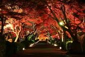 秋之戀(14) 京都秋夜:0862.jpg 坂本地区西教寺