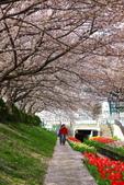 春(2) 藝界人生:0181.JPG 江川せせらぎ緑道