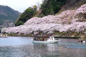 春(6) 春的禮讚:0685.JPG 滋賀.海津大崎