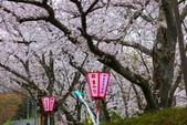 春(7) 美麗的零落:0954.JPG 船岡城址公園